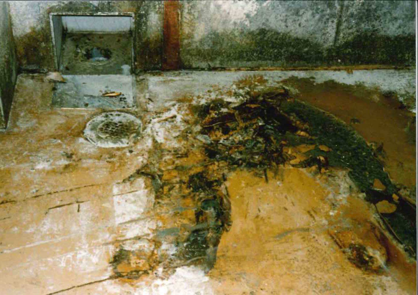 饅頭製造工場床  低臭気ノンスチレン樹脂耐熱水性塗り床工事_02